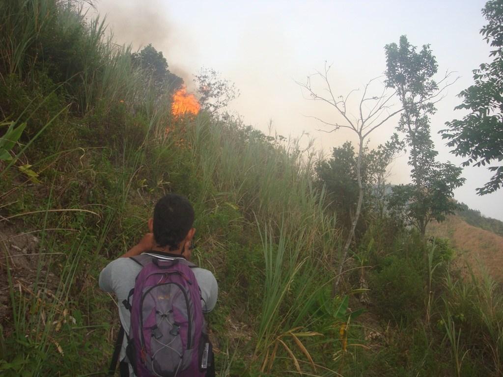 Tolong Kebakaran Hutan Mendekati Candi Selogriyo Borobudur News Terbakar Mencapai
