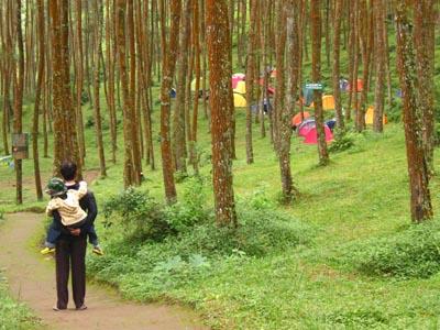 Hutan Wisata Mangli Pendekartidar Gardu Pandang Kab Magelang