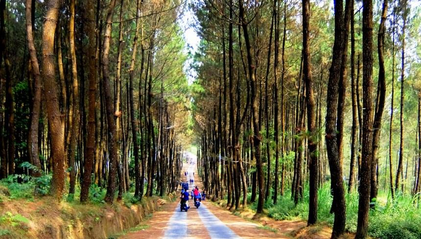 70 Rekomendasi Tempat Wisata Magelang Jawa Tengah Terpopuler Pinusan Kragilan