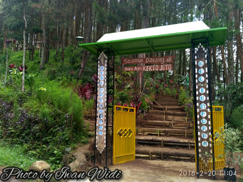 Keindahan Hutan Pinus Bukit Asri Kertojoyo Traveling Diary Nama Tempat