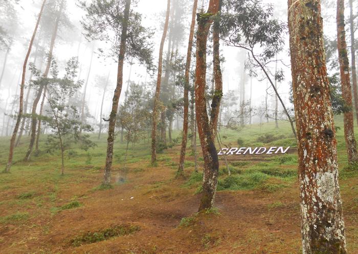 Asmarainjogja Medianya Sahabat Muda Berita Grenden Antara Hutan Pinus Menjulang
