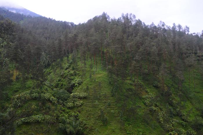 Asmarainjogja Medianya Sahabat Muda Berita Hutan Pinus Grenden Kab Magelang