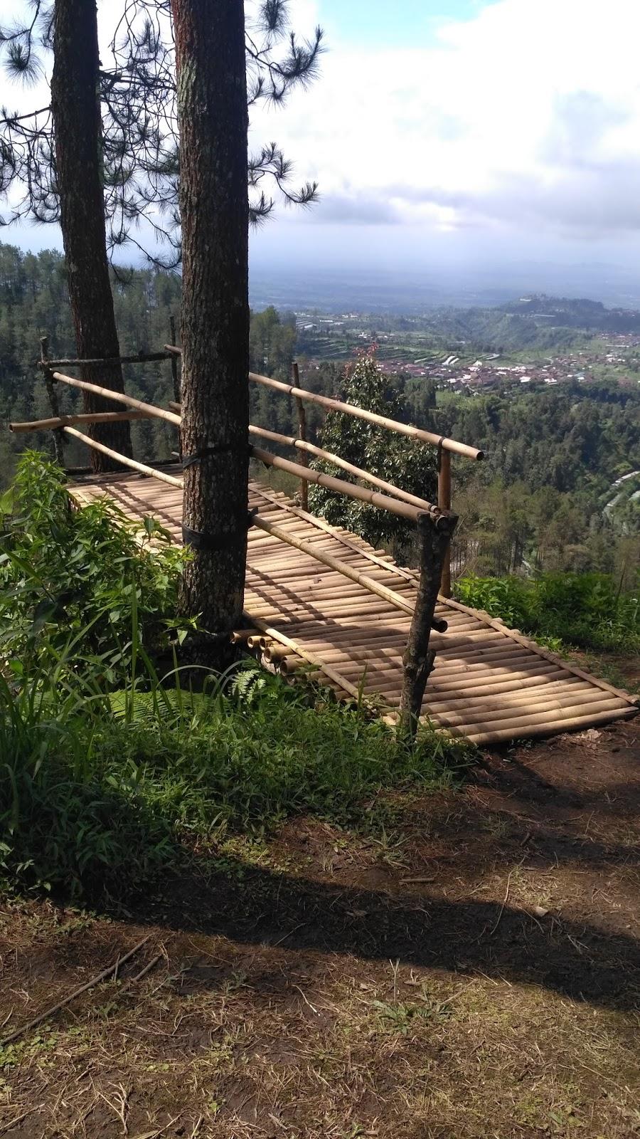Blusukan Wisata Alam Grenden Traveling Diary Spot Foto Hutan Pinus