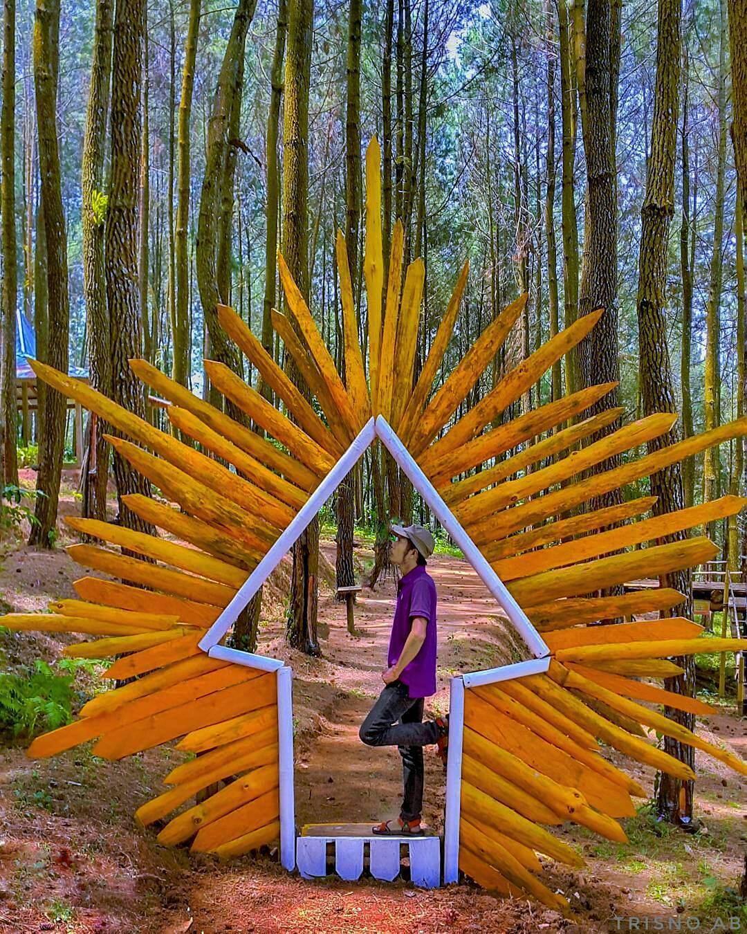 Bukit Asri Kertojoyo Wisata Selfie Kekinian Adem Magelang Hutan Pinus