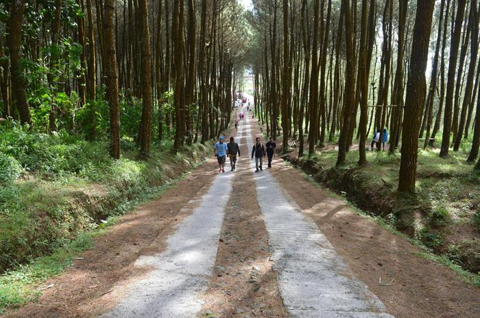 Cantik Hutan Pinus Grenden Top Selfie Foto Asmarainjogja Kab Magelang