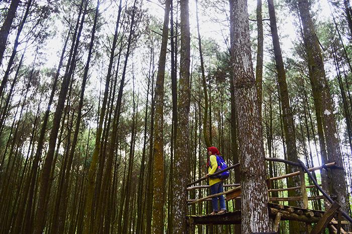 Cantik Hutan Pinus Grenden Top Selfie Mangunan Imogiri Foto Asmarainjogja