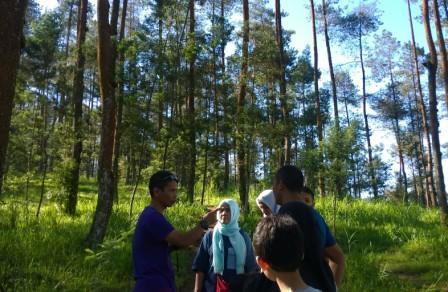 Duniajogjanews Twitter Pesona Hutan Pinus Grenden Kec 4 24 Pm