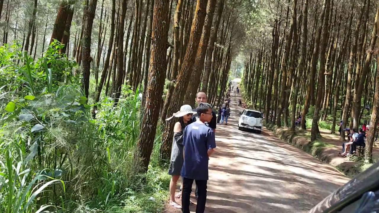 Hutan Pinus Kragilan Kopeng Magelang Youtube Grenden Kab