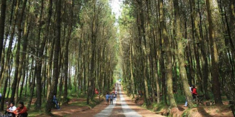 Hutan Pinus Lereng Merbabu Suasananya Keren Selfie Grenden Kab Magelang