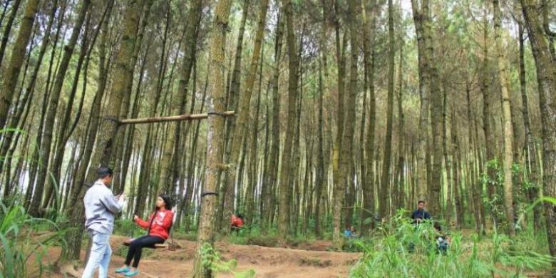 Hutan Pinus Lereng Merbabu Suasananya Keren Selfie Pengunjung Bersantai Kawasan