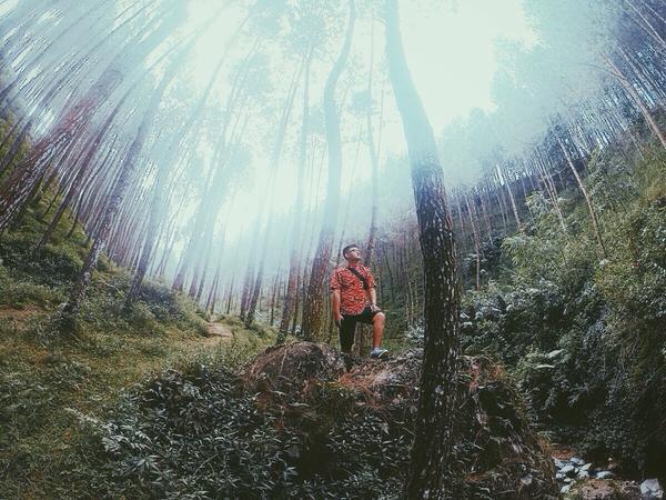 Lima Lokasi Terbaik Selfie Kabupaten Magelang Info Hutan Pinus Membentang