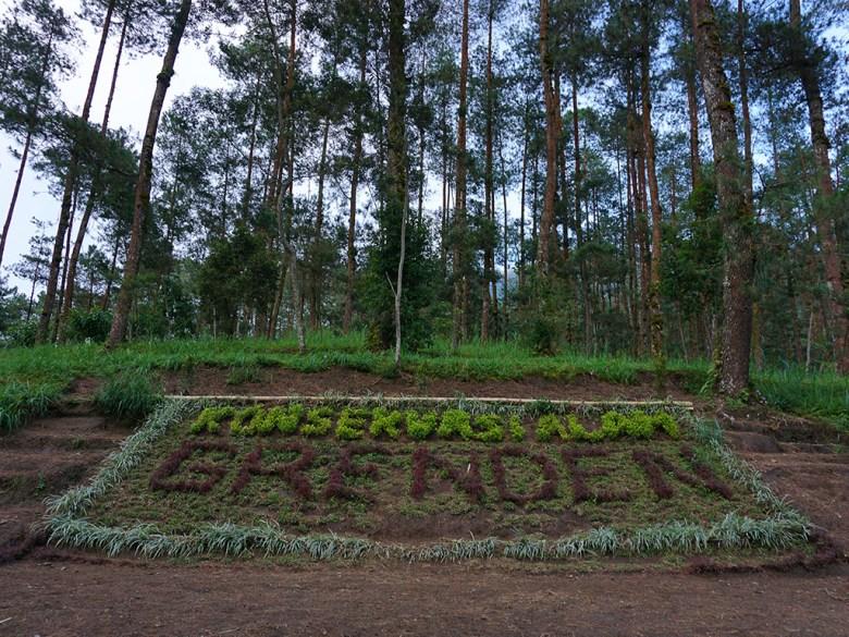 Menengok Rumah Kurcaci Grenden Lereng Merbabu Magelang Hutan Pinus Kab