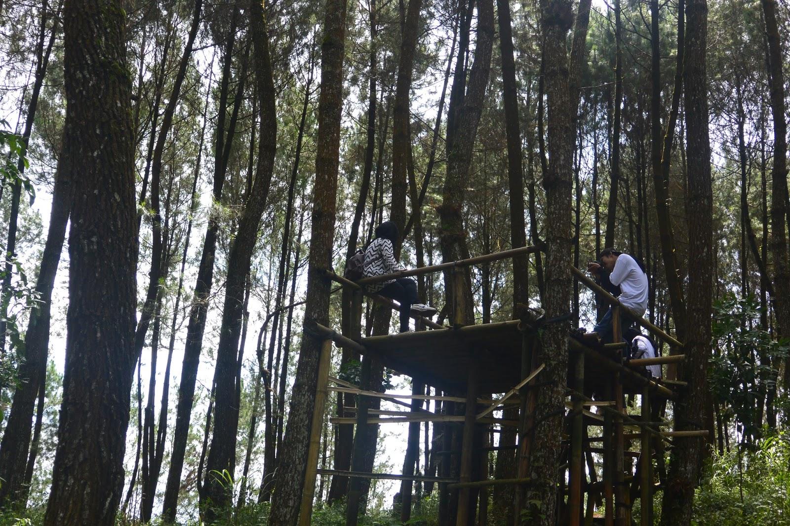 Top Selfie Pinusan Kragilan Hutan Pinus Magelang Makin Dikenal Grenden