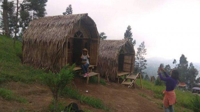 Wisata Magelang Hutan Pinus Taman Grenden Pakis Hadirkan Rumah Hobbit