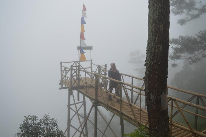 Asmarainjogja Medianya Sahabat Muda Berita Jembatan Hati Hutan Pinus Grenden