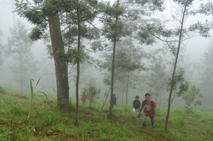 Asmarainjogja Medianya Sahabat Muda Berita Pengunjung Hutan Pinus Grenden Jembatan