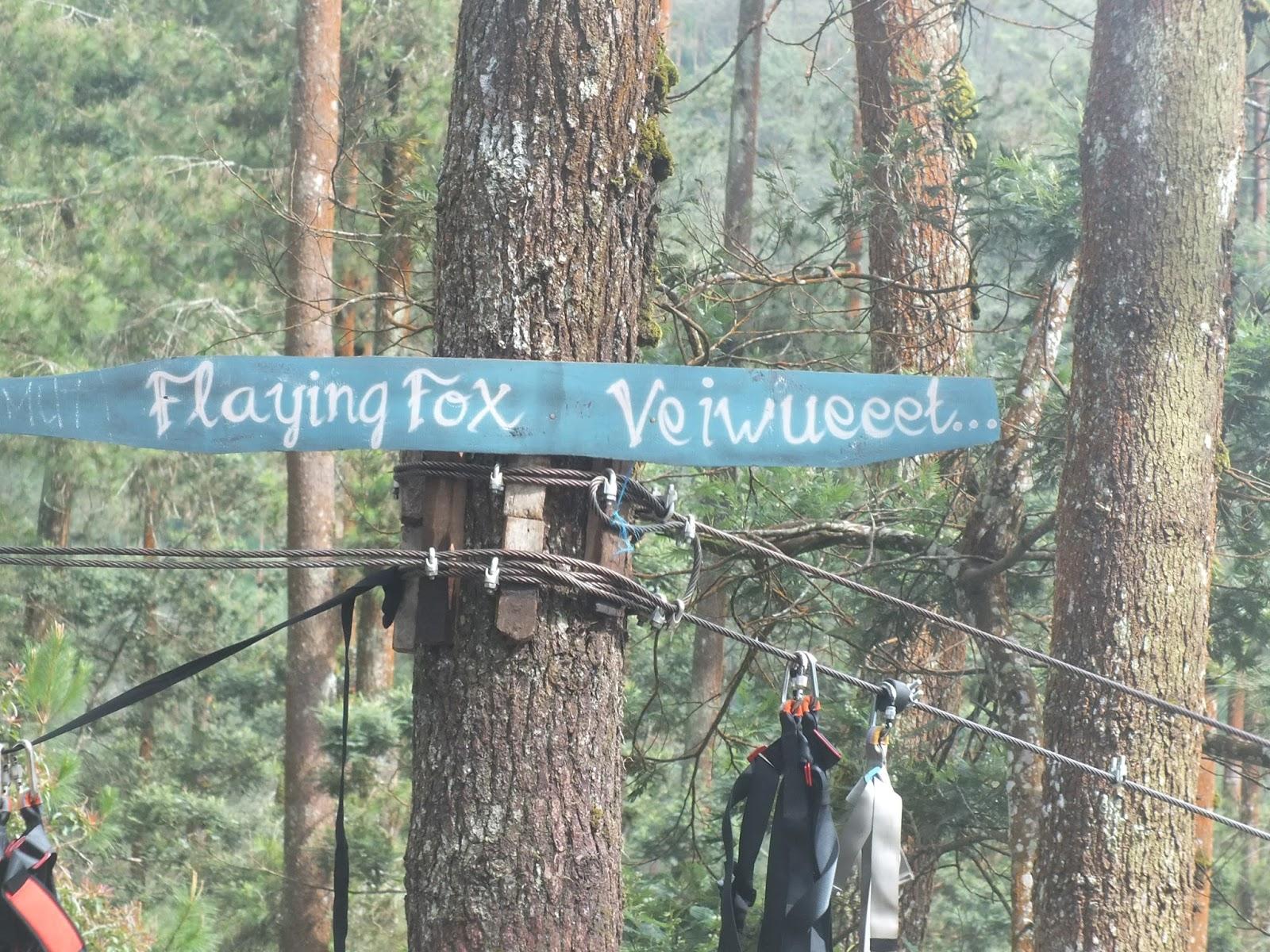 Explore Magelang Keindahan Hutan Pinus Grenden Januari 2017 Jembatan Hati