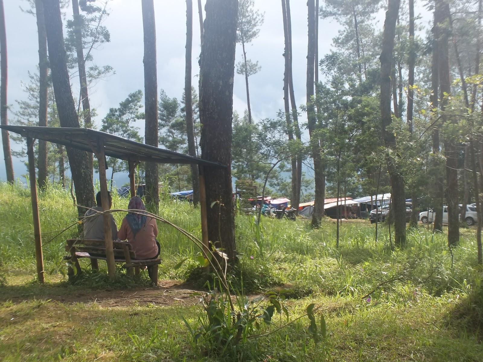 Explore Magelang Keindahan Hutan Pinus Grenden Januari 2017 Keadaan Jembatan