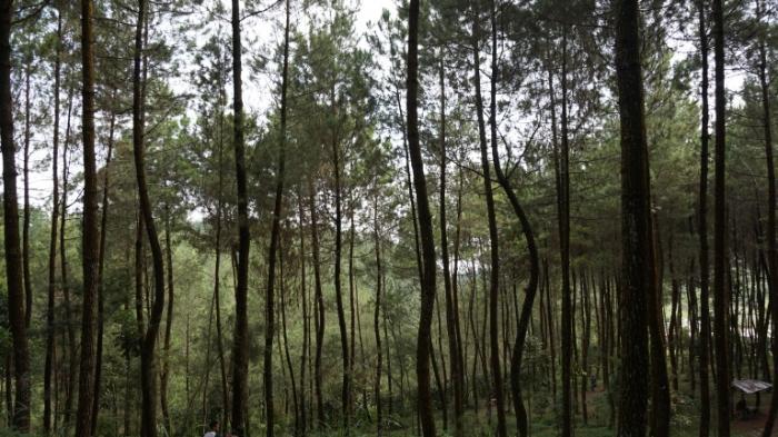 Limakaki Lima Lokasi Wisata Water Spot Magelang Destinasi Alam Patut