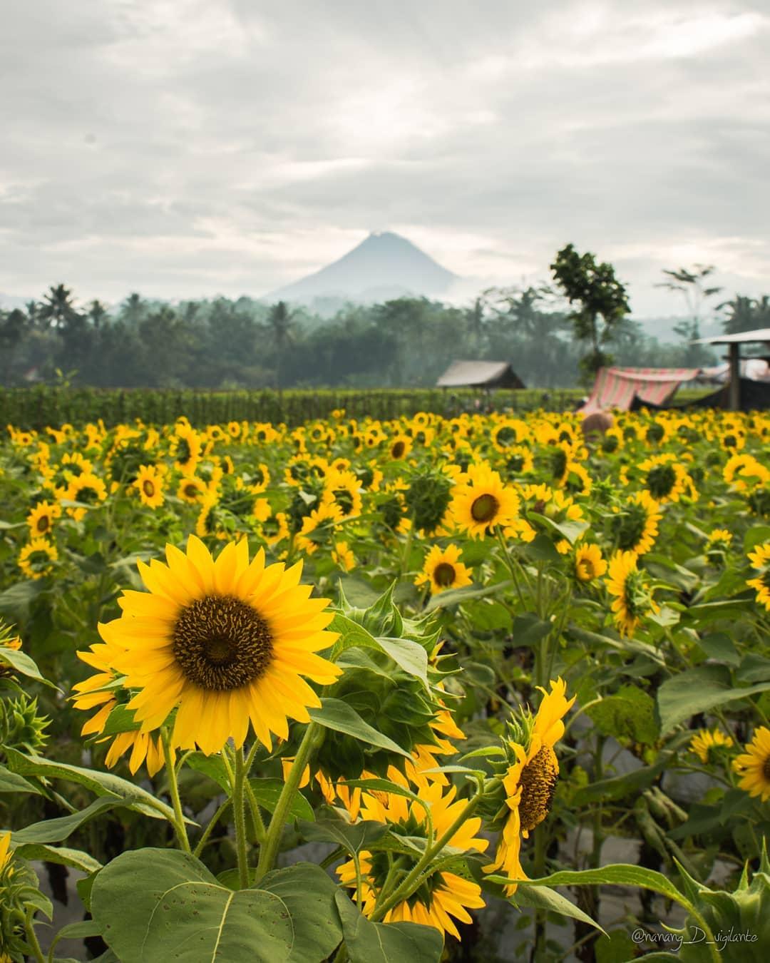 Lokasi Harga Tiket Masuk Taman Dewari Magelang Badakan Kab