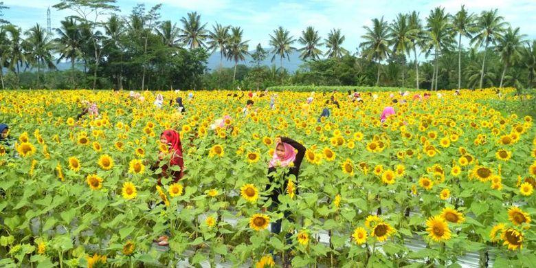 Taman Dewari Magelang Info Lengkap Harga Tiket Masuk Rute Kompas