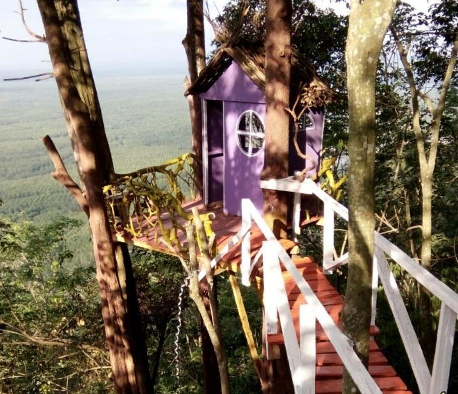 Piknikyok Rute Menuju Rumah Pohon Puncak Hoza Hobbit Wonomulyo Kab