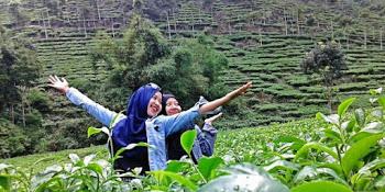 Rute Lokasi Rumah Hobbit Wonomulyo Magetan Kebun Teh Jamus Ngawi