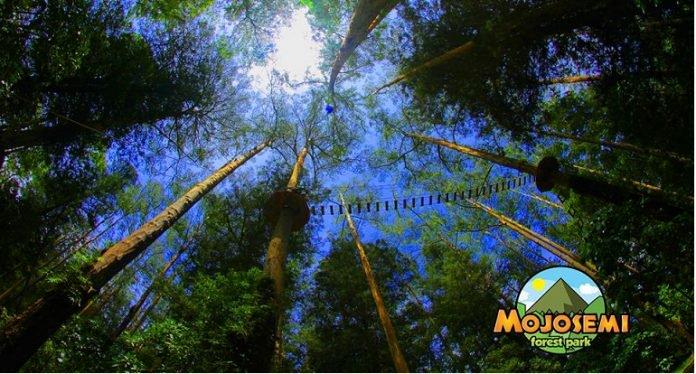 Magetan Punya Obyek Wisata Andalan Mojosemi Forest Park Wahana Taman