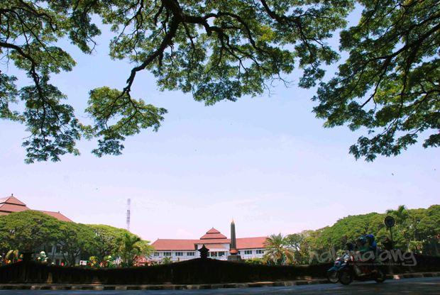Pertama Indonesia Kota Malang Miliki Pohon Pusaka Malangpers Alun Tugu
