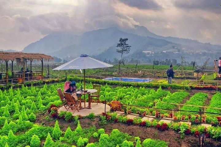 Archive Juni 2017 Cafe Sawah Pujon 2018 Kidul Kab Malang