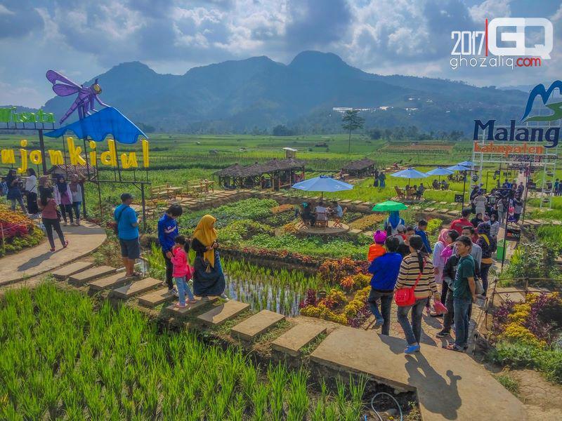 Berkuda Cafe Sawah Desa Wisata Pujon Kidul Ghozaliq Kab Malang