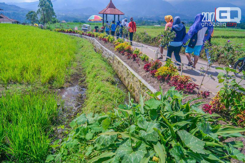 Berkuda Cafe Sawah Desa Wisata Pujon Kidul Ghozaliq Menyusuri Kab