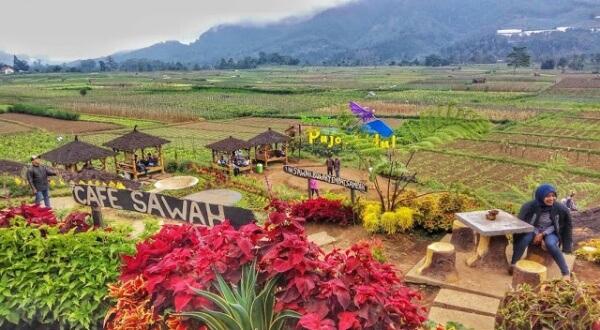 Cafe Sawah Pujon Kidul Outdoor Kekinian Malang Kab