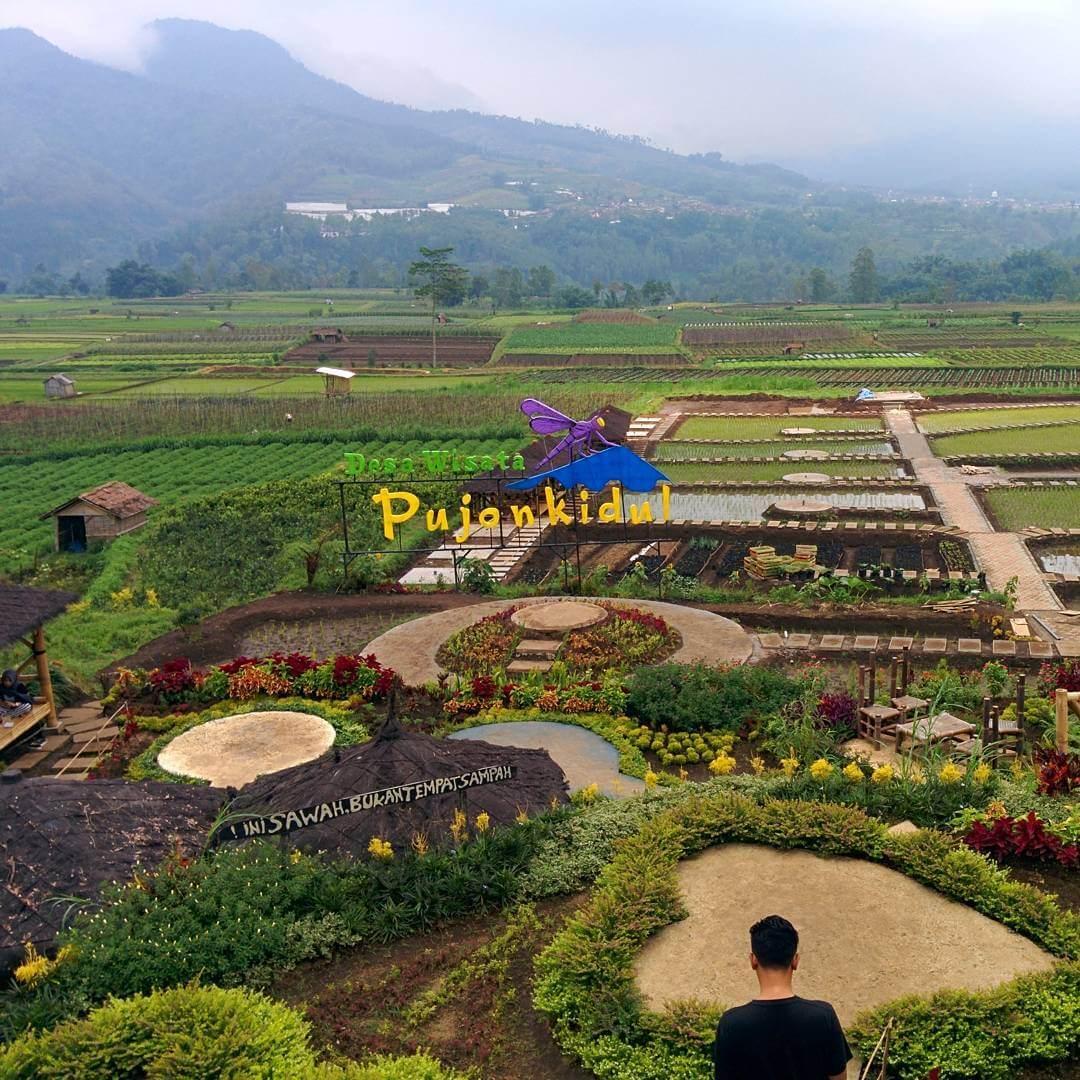 Cafe Sawah Pujon Kidul Outdoor Kekinian Malang Lokasi Kab