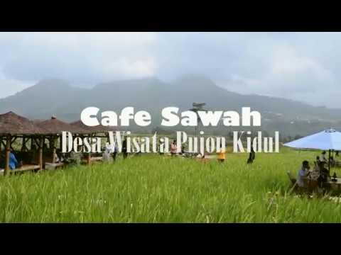 Cafe Sawah Pujon Kidul Youtube Kab Malang