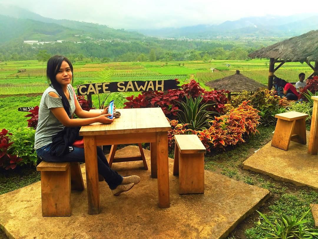 Lokasi Rute Menuju Cafe Sawah Pujon Serunya Menikmati Hidangan Temani