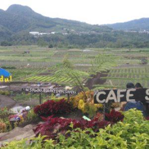 Tiket Masuk Cafe Sawah Pujon Kidul Malang Menu Harga Makanan
