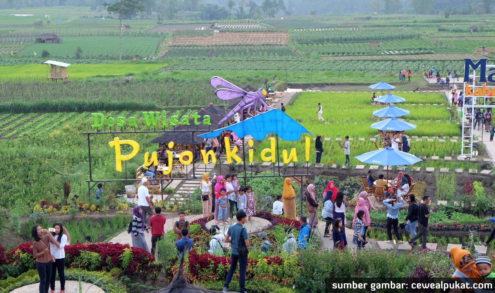 Tips Membangun Desa Wisata Ala Pujon Kidul Padi Cafe Sawah