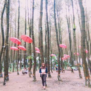 11 Gambar Hutan Pinus Semeru Sumberputih Wajak Malang Rute Foto