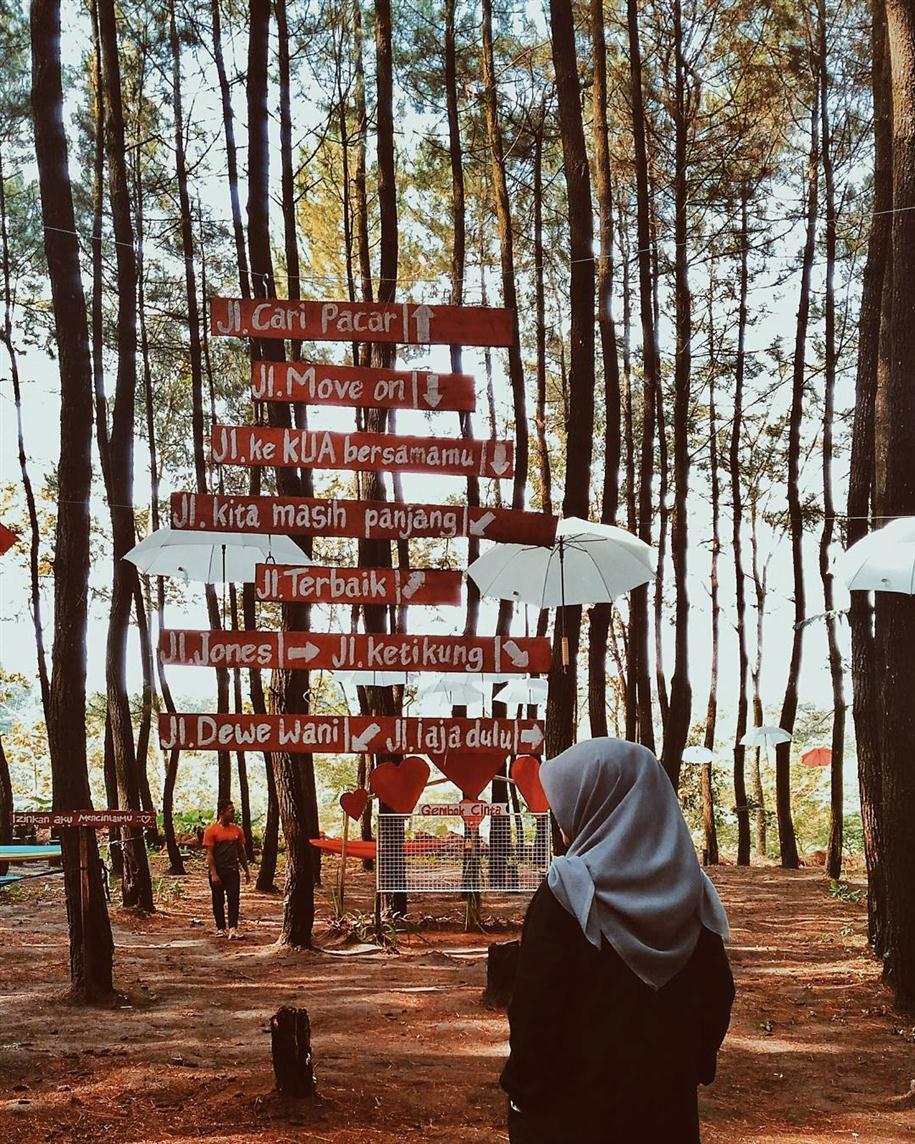 Archive Juli 2017 Salah Satu Spot Unik Hutan Pinus Wajak
