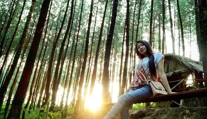 Destinasi Wisata Hutan Pinus Malang Ngopi Yok Kampung Enam Wajak