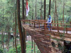 Kampung Enam Wajak Pesaing Hutan Pinus Semeru Ngalam Taman Bendosari