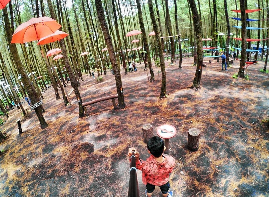Lembah Kera Potensi Wisata Panjat Tebing Pagak Ngalam Hutan Pinus