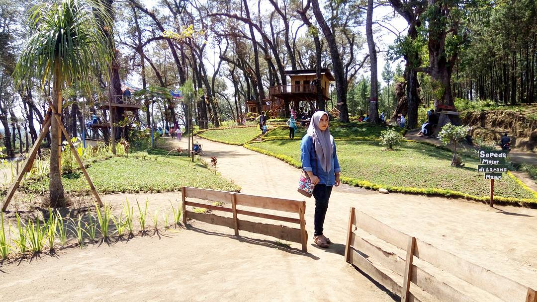 Lokasi Rute Tiket Rumah Pohon Kampung Enam Wajak Malang Harga