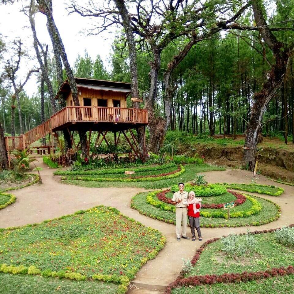 Menikmati Kesejukan Hutan Pinus Malang Wisata Destinasinya Kampung Enam Wajak