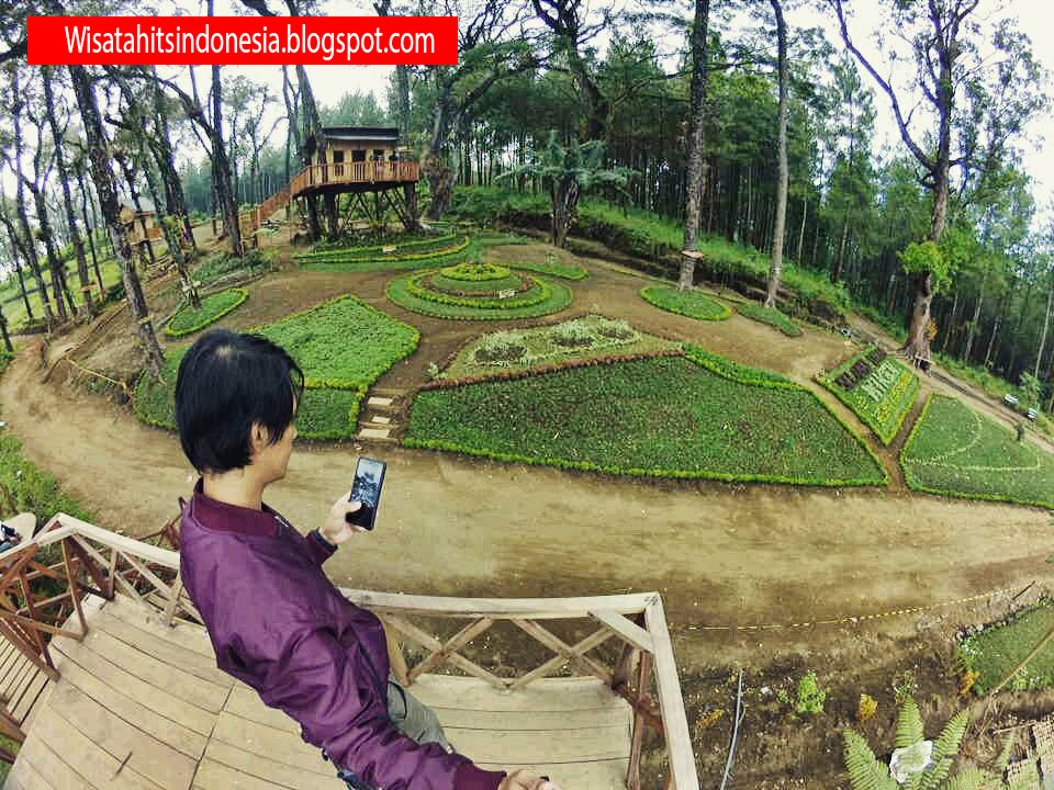 Pesona Rumah Pohon Kampung 6 Wajak Malang Tempat Lokasi Enam