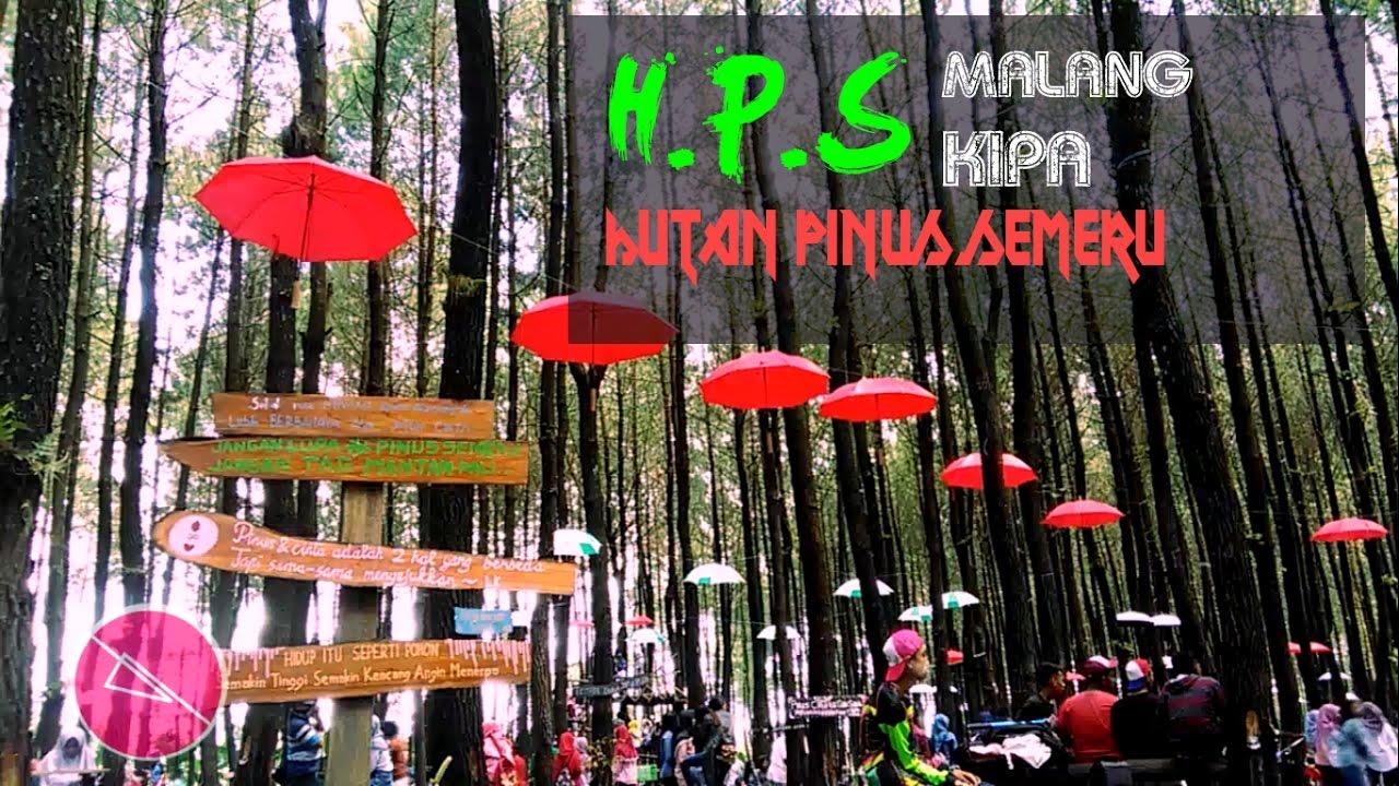 Wisata Dimalang Hps Hutan Pinus Semeru Malangkipa Youtube Kampung Enam