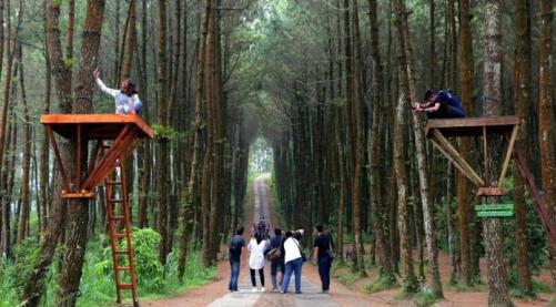 Wisata Malang Indah Sejak Dibuka Awal 2017 Hutan Pinus Semeru