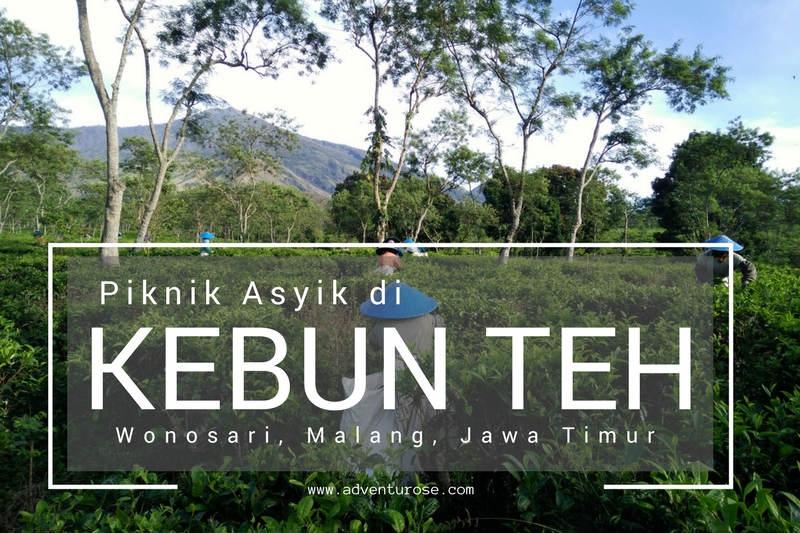 Adventurose Life Adventure Piknik Asyik Kebun Teh Wonosari Malang Kab