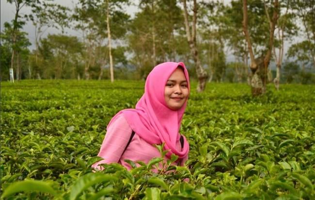 Agrowisata Kebun Teh Wonosari Lawang Jawa Timur Kab Malang